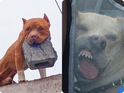17 Fotos que provam que a vida com animais nunca é chata
