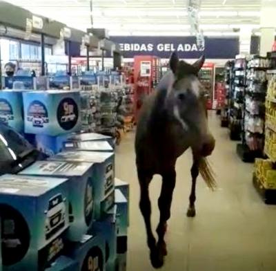Cavalo entra em supermercado no interior de São Paulo