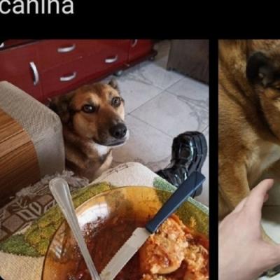 Hipocrisia canina