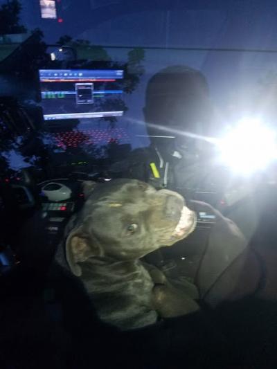 Cachorro rouba carro policial no Texas após ser preso