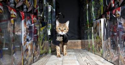 Conheça alguns gatos que tem empregos de verdade
